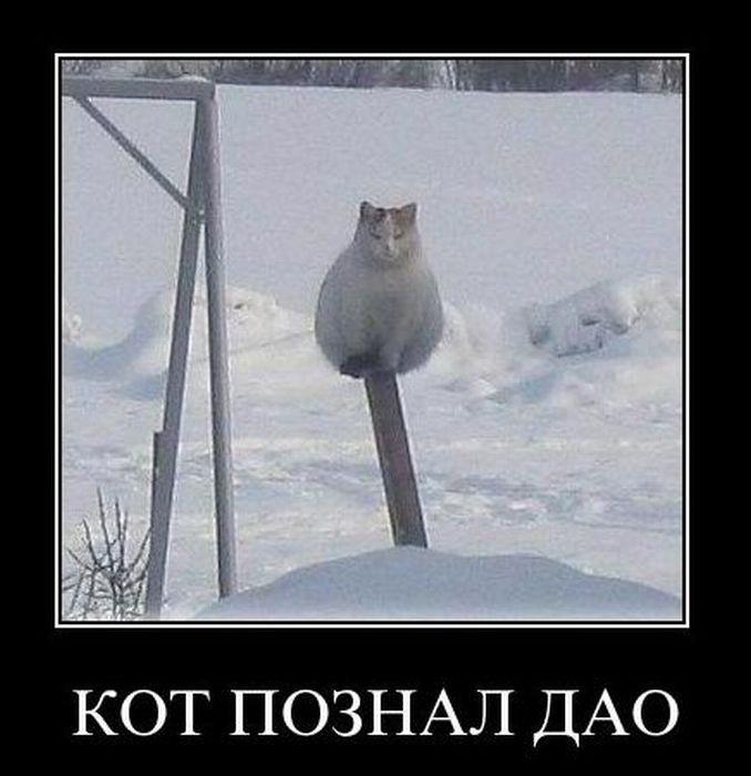 Кот, познавший дао...